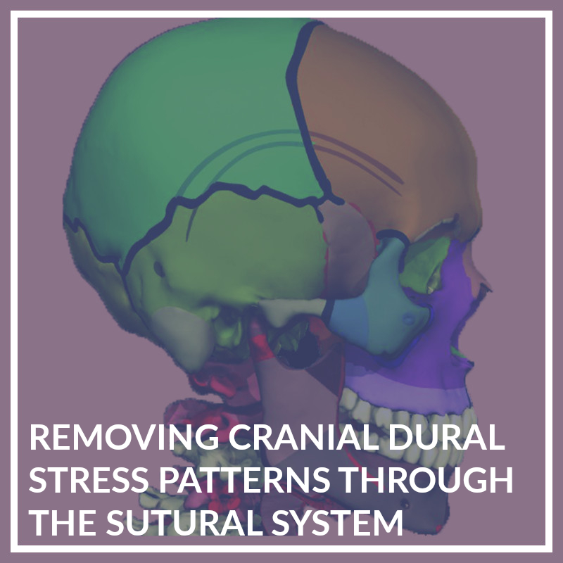 Removing Cranial Dural Stress Patterns through the Sutural System